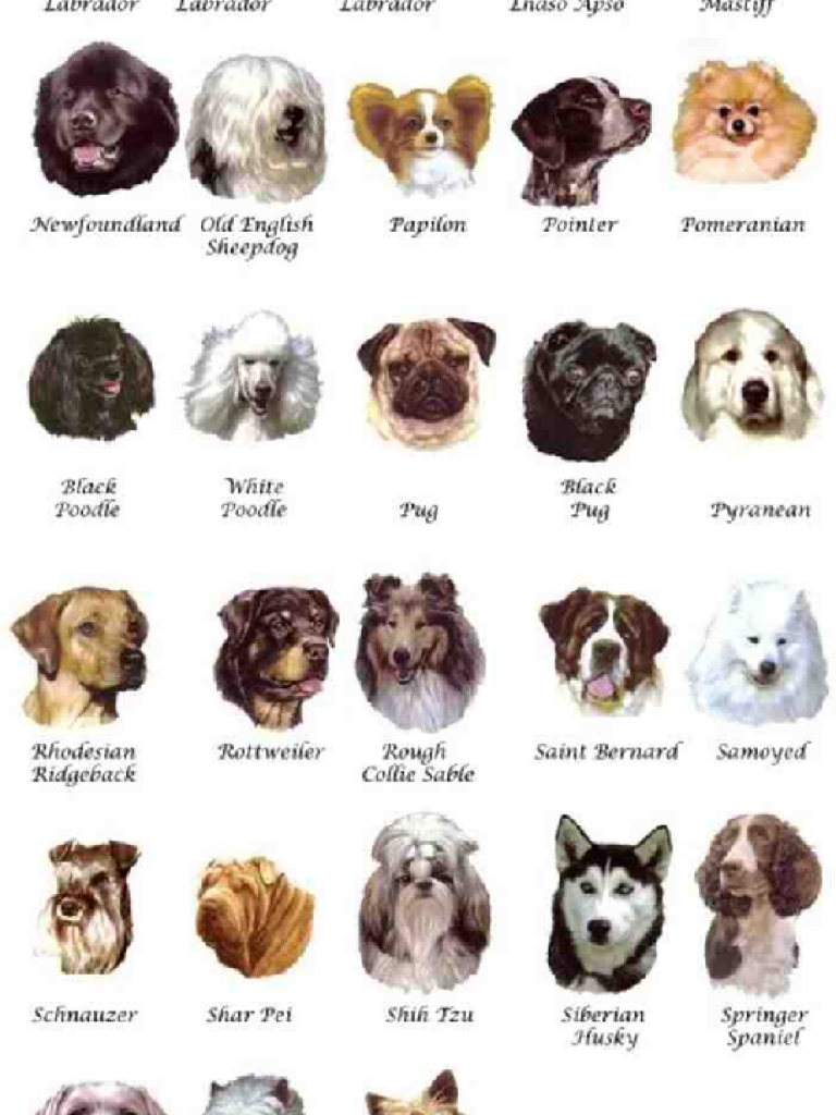 все названий собак и картинки