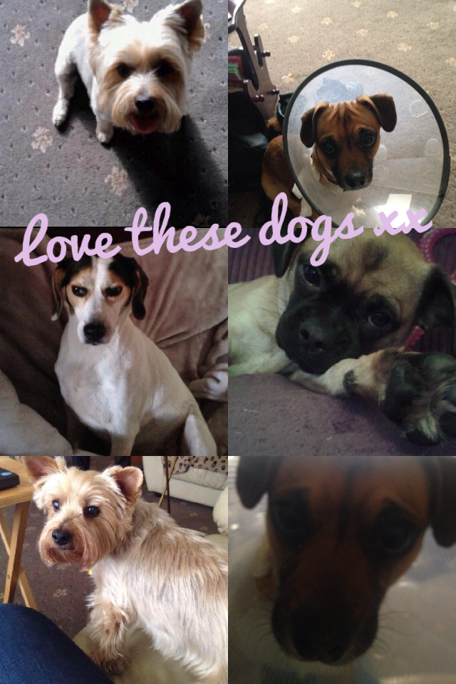 Love these dogs xx