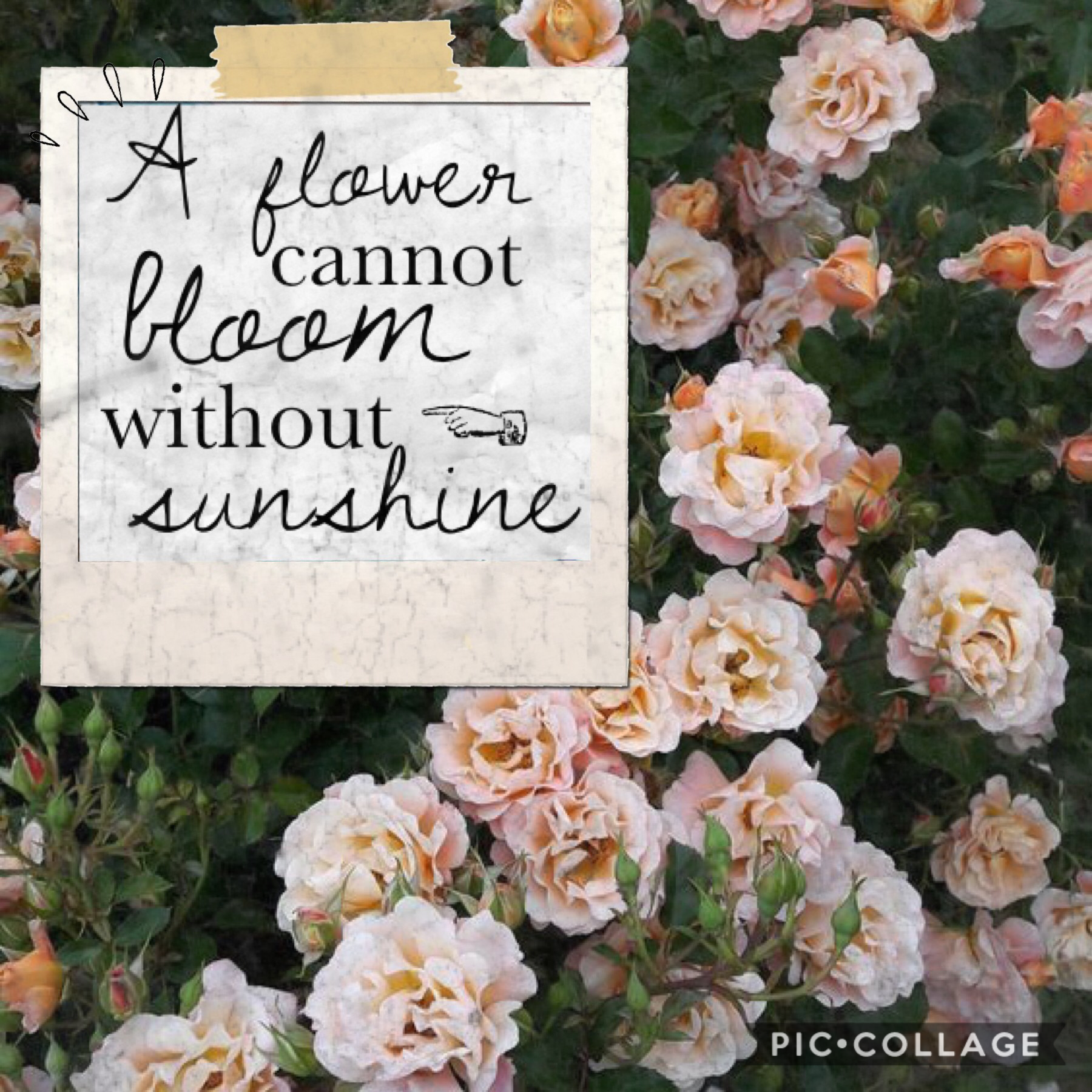 🌷🌸A flower cannot bloom without sunshine🌸🌷