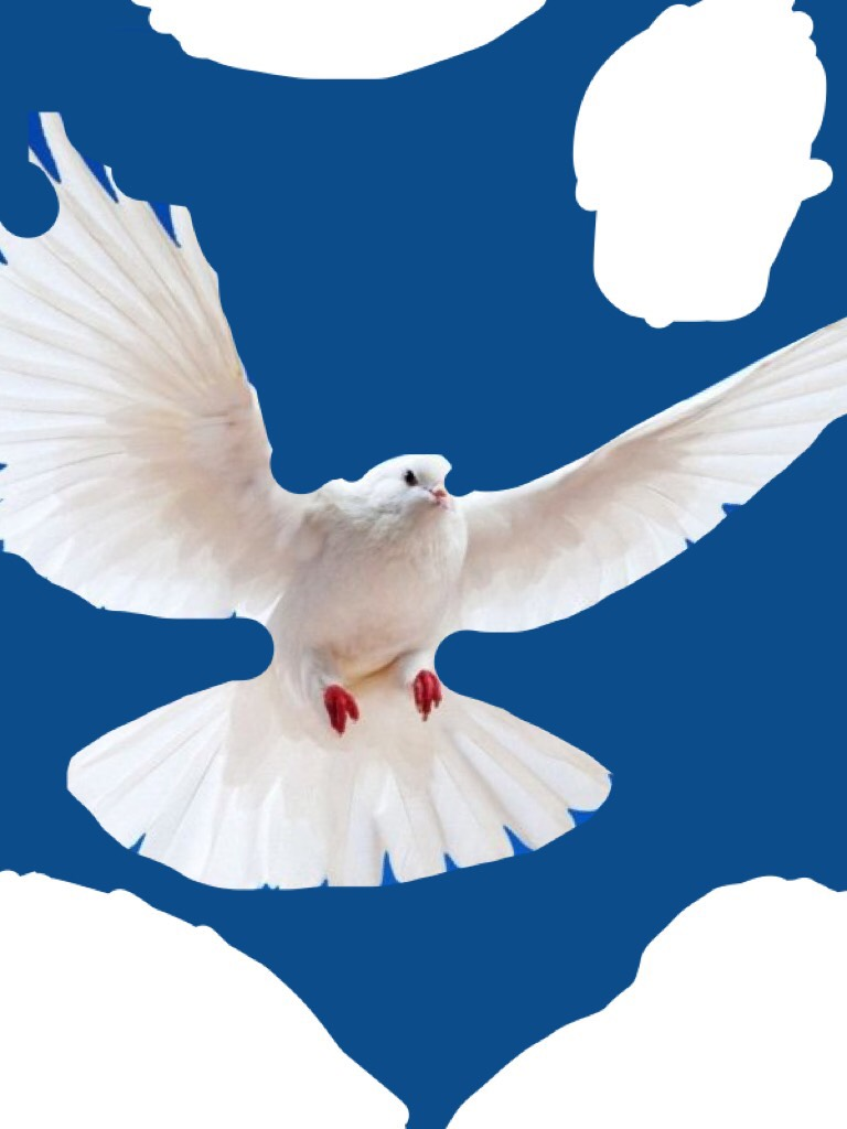 Have an amazing Dove day of Christmas