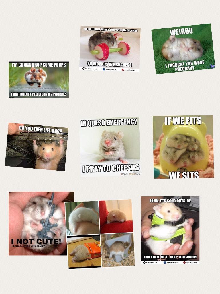Hamster 🐹 jokes