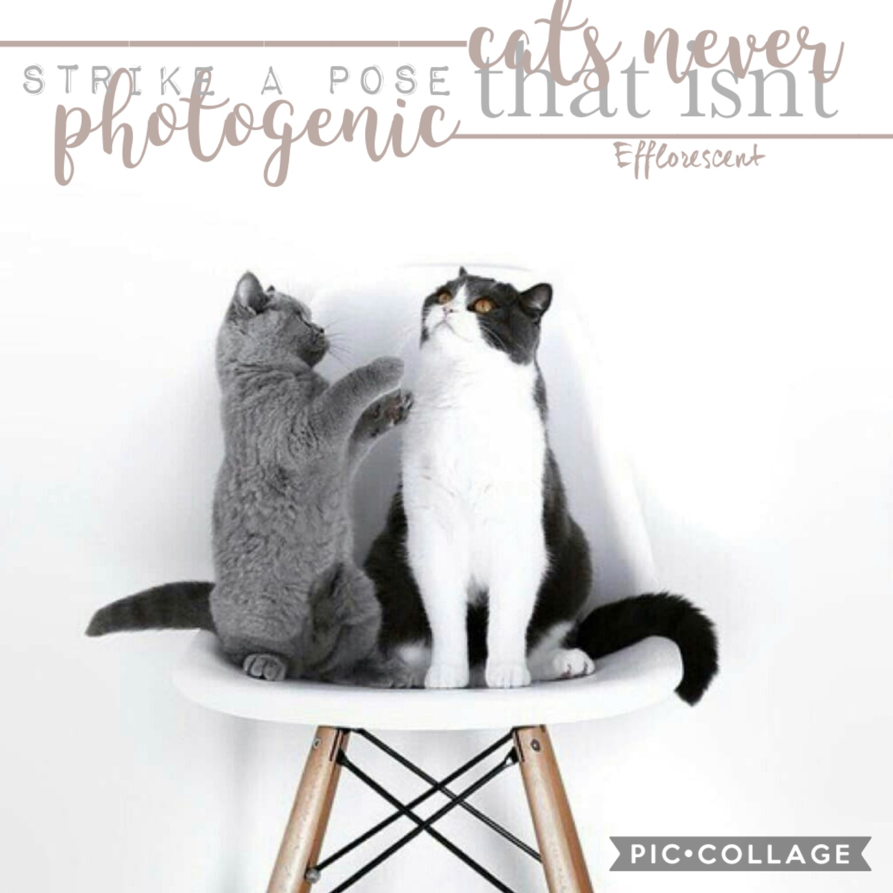 Entered in @kittens4life contest!🐱