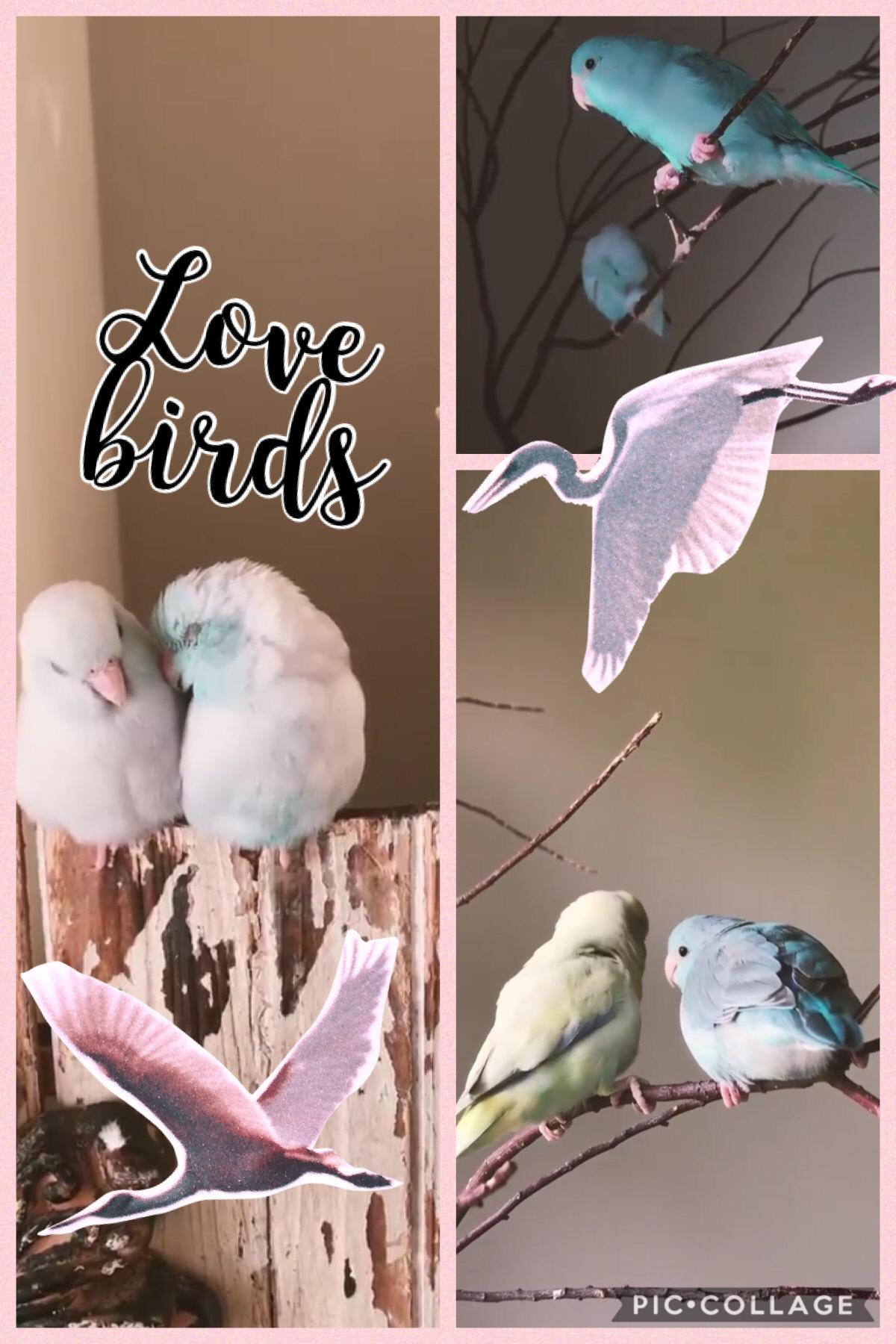 Birds are so cute