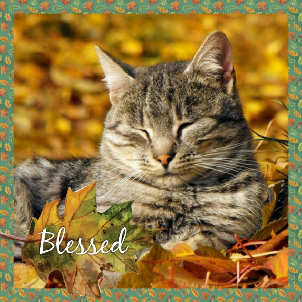 Even Cat's Are Blessed