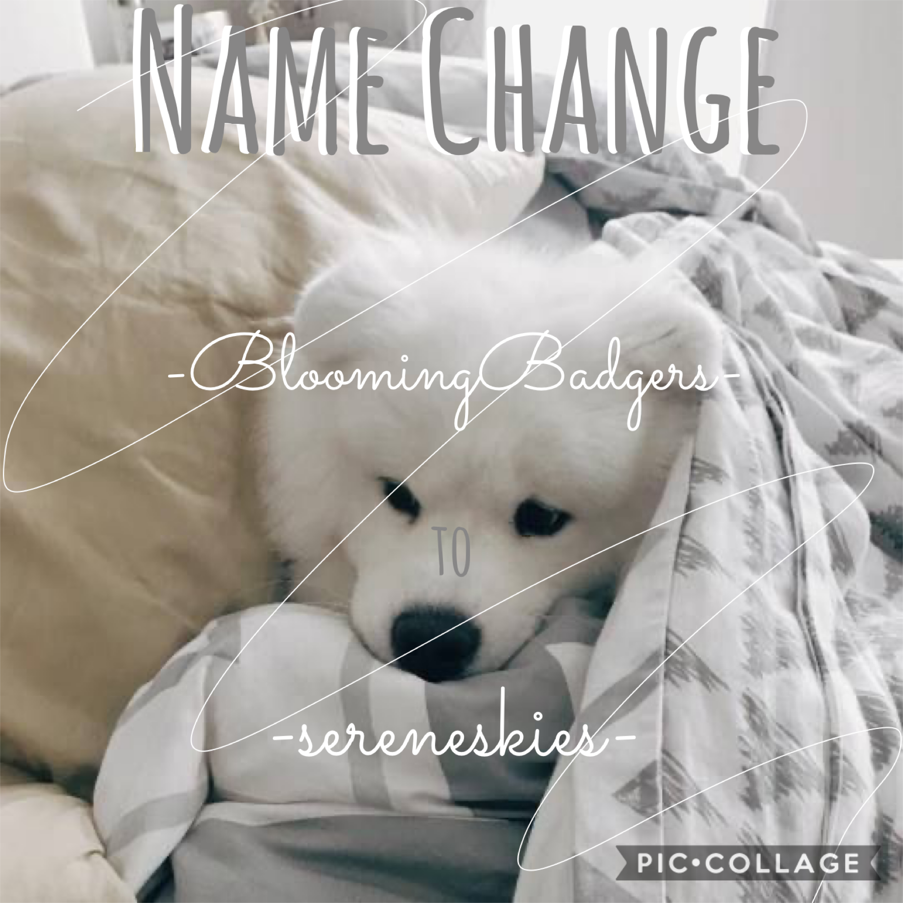 t a p  heyy y'all  i think it's time for a fresh name :) i hope you like my new name please go enter my fall games!!!! and i would love it if you checkout my other socials😉 💞byee💞
