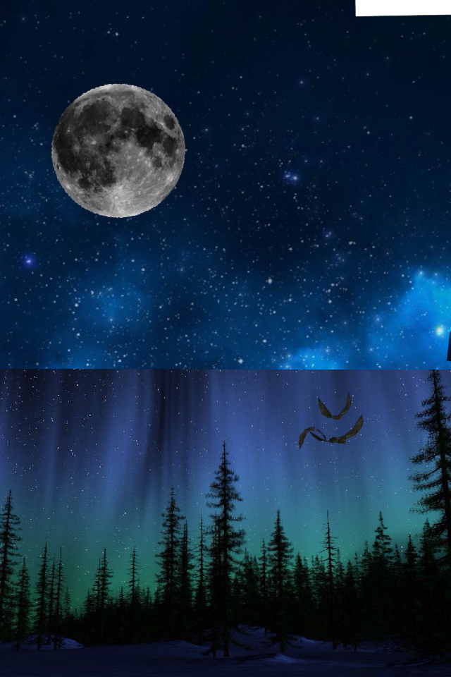 Ahhhh! Just looking at a refreshing crisp night in the woods😌🌳🌳🌳🍄🌰🌸🌌🌚