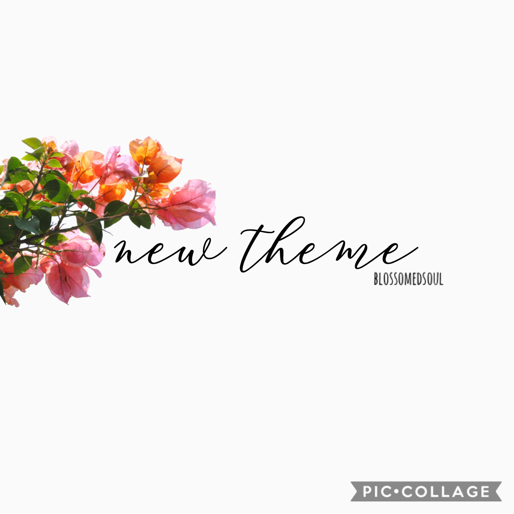 t a p  new theme! i got a little tired of the minimalist one so i'm trying something new ♥️✨🌿