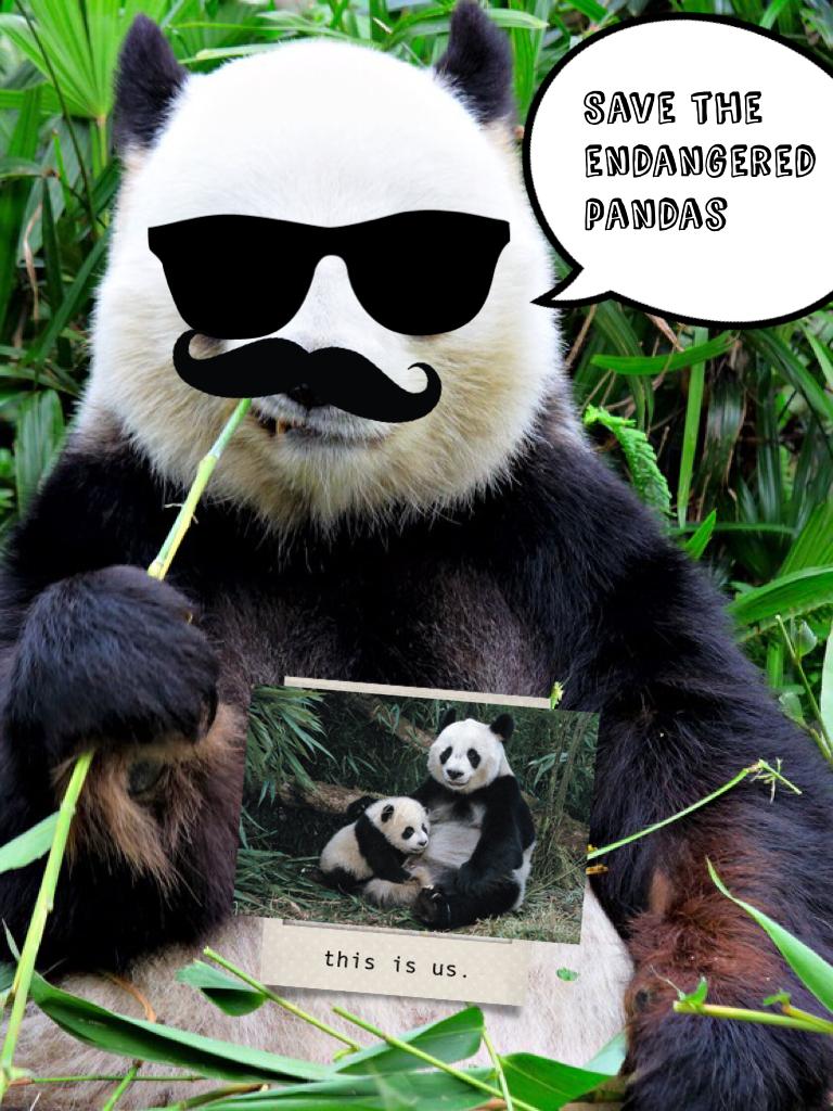 Save the endangered pandas