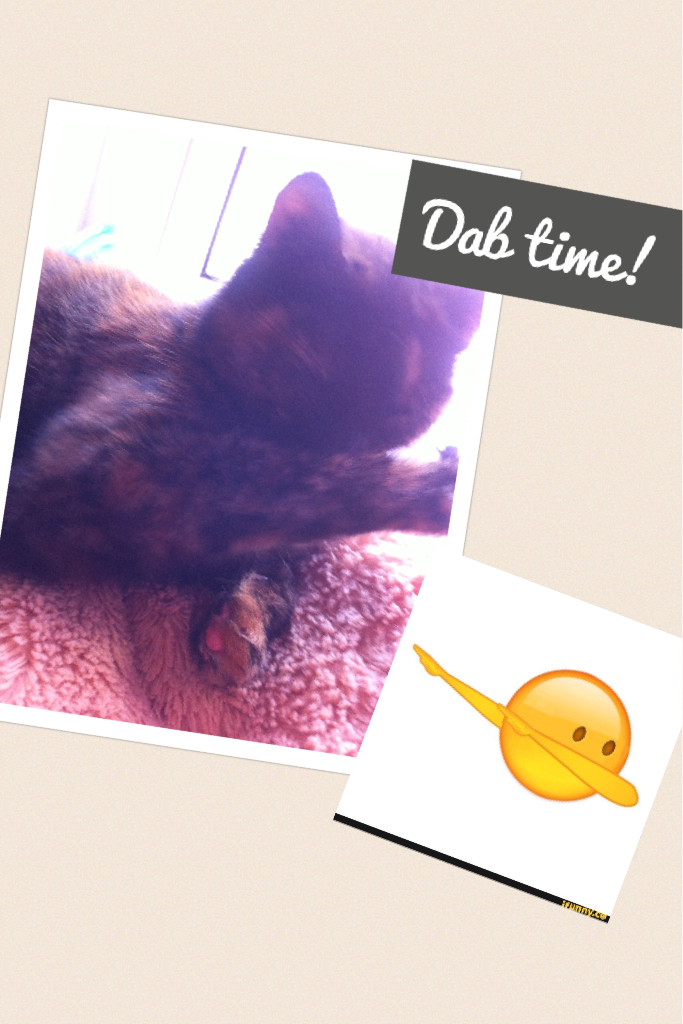 Dab time! My cat can dab