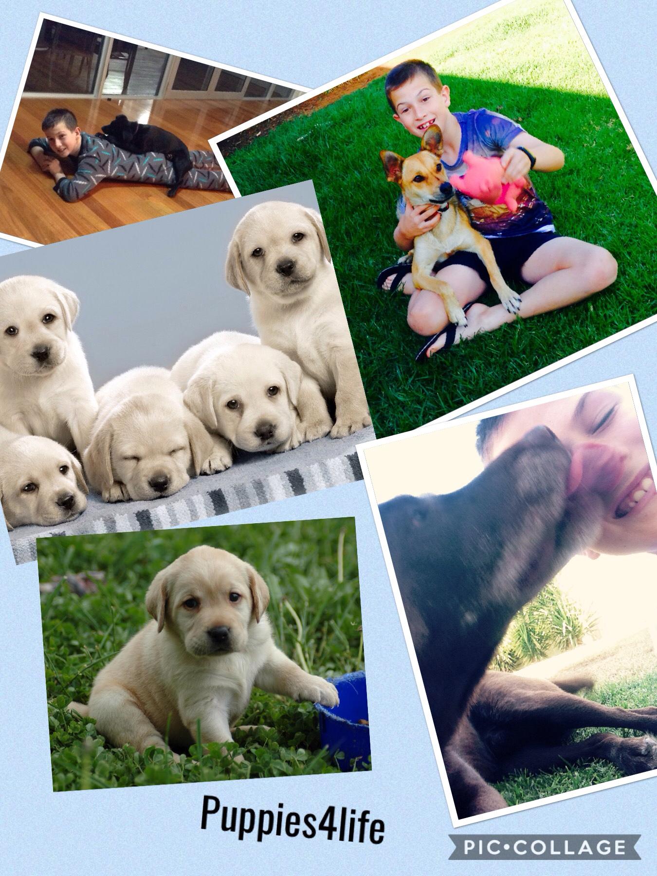 Puppies4life