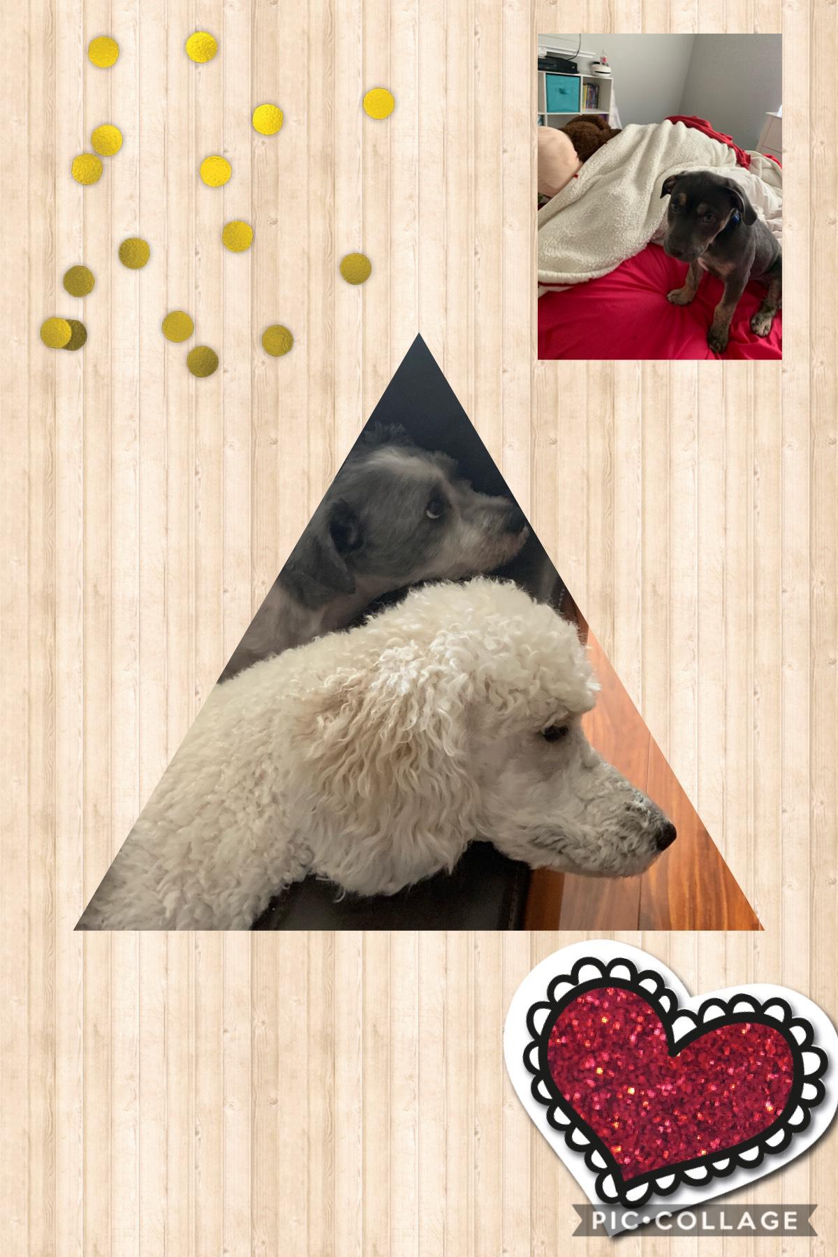 Love puppy's!!