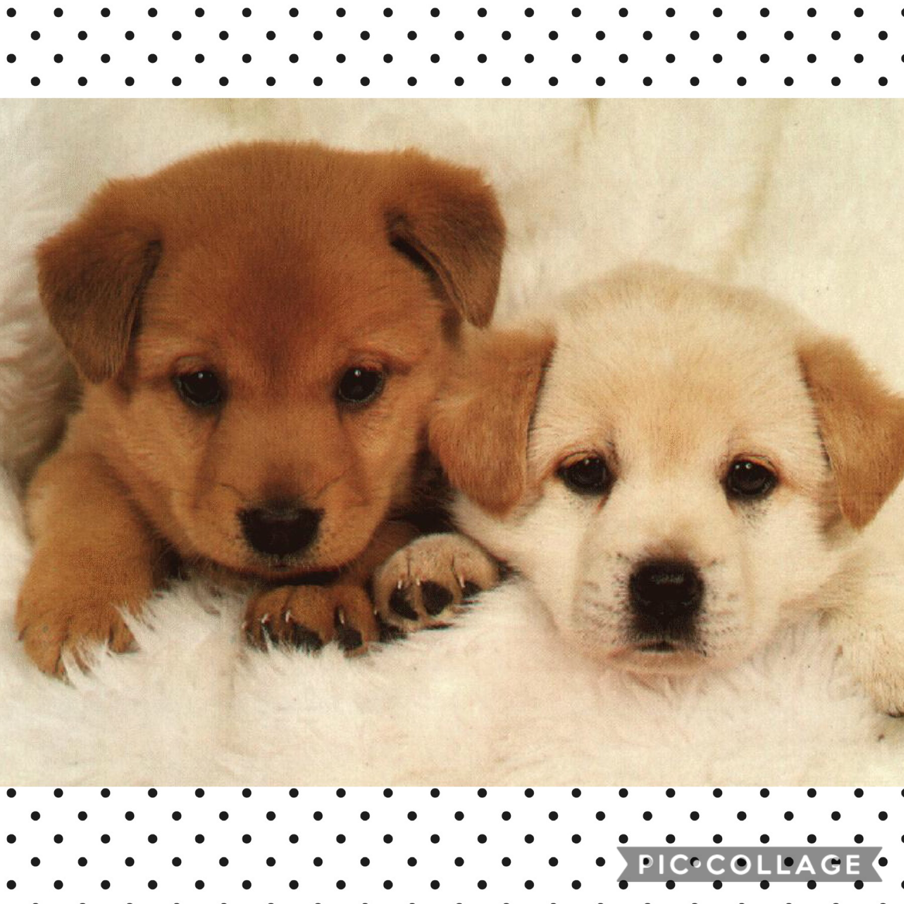 Look how cute my puppies are
