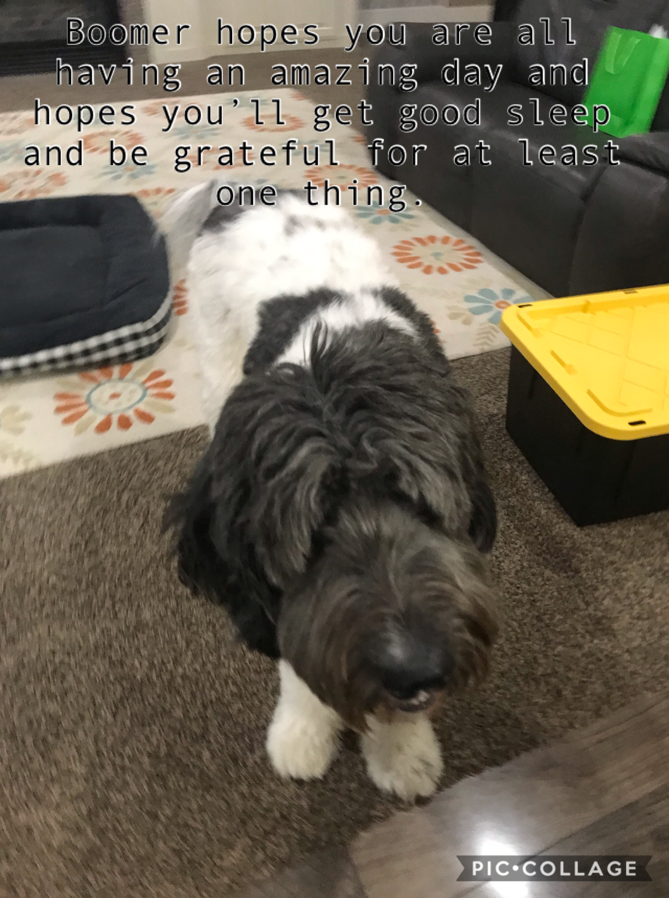 Meet my boyfriend's dog Boomer. Sooooo precious I love him (both of them oops haha) what's something you're grateful for? I'm grateful for opportunities however rare and difficult 2/25/2020