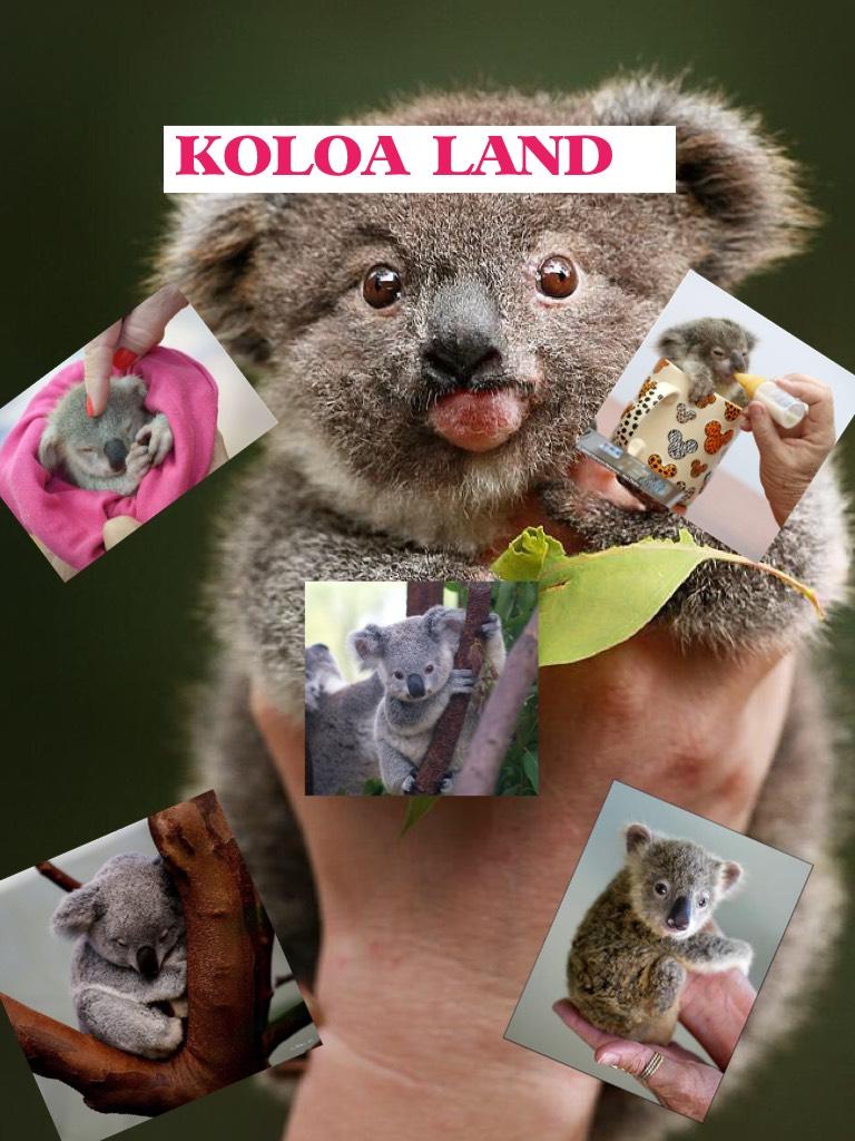 KOLOA LAND I ❤️ Koloa