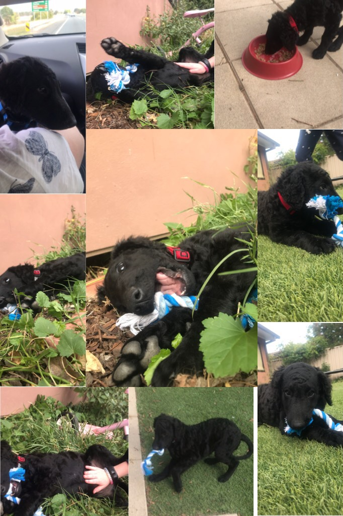My doggo daisy 🐶