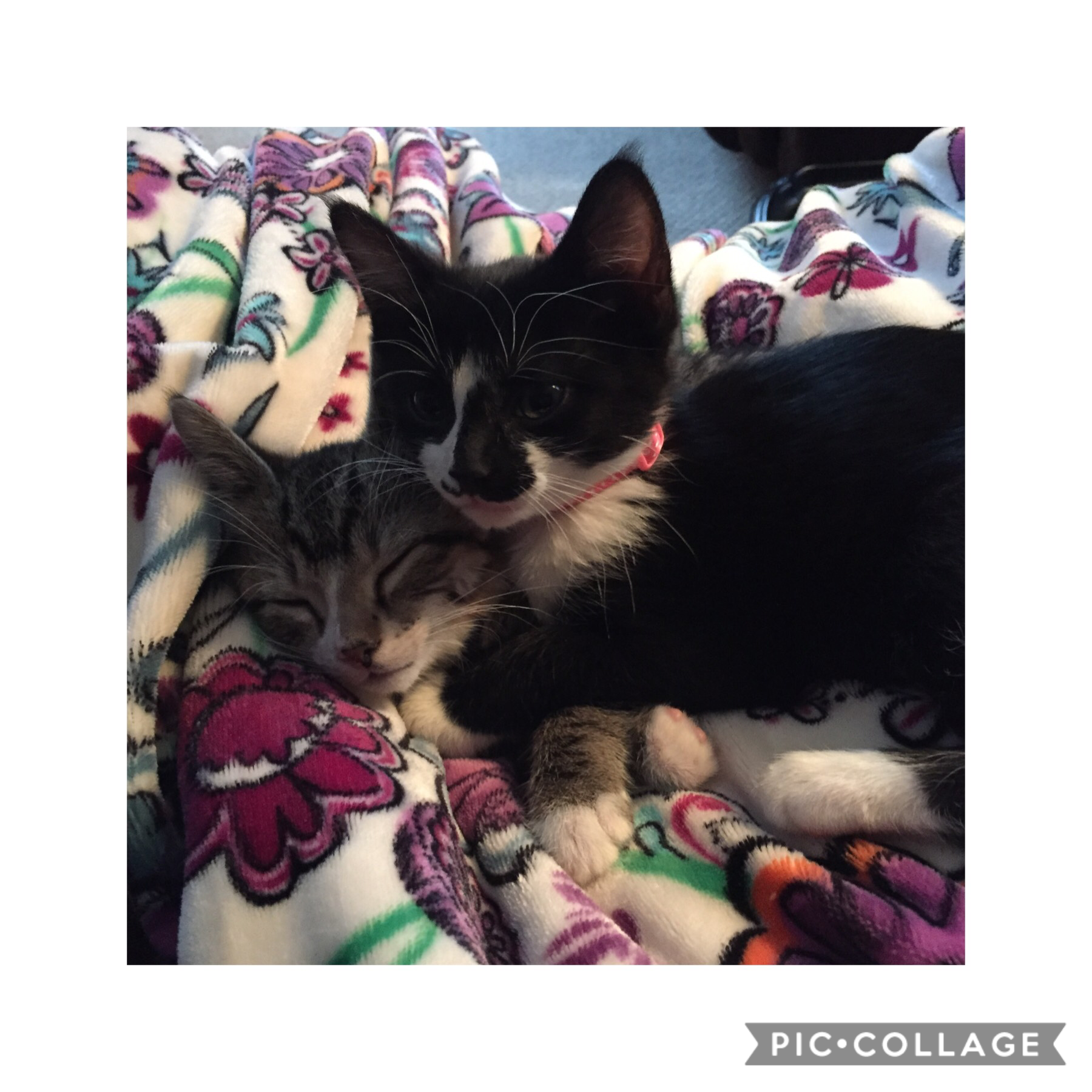 Here is a picture of my cats if you decide to use it for my contest in the other post. Let me know if you want me to make it smaller for you to use it