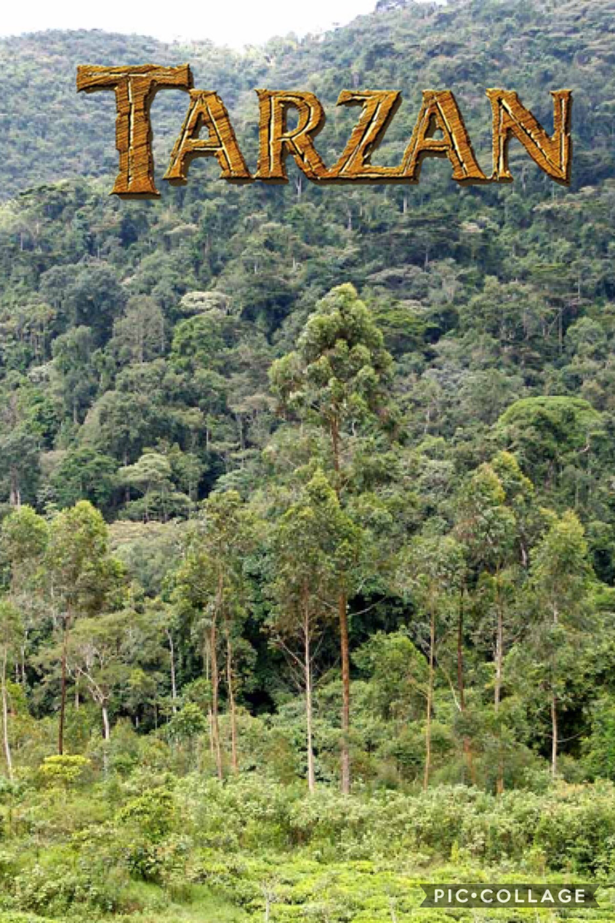 Bwindi national park, the inspiration for the Disney's Tarzan reboot!!