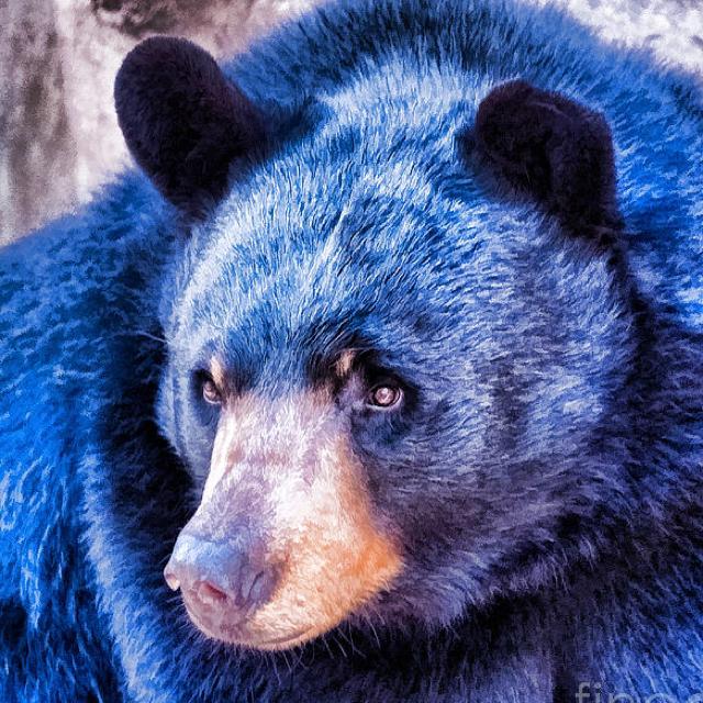 картинки синего медвежонка образом