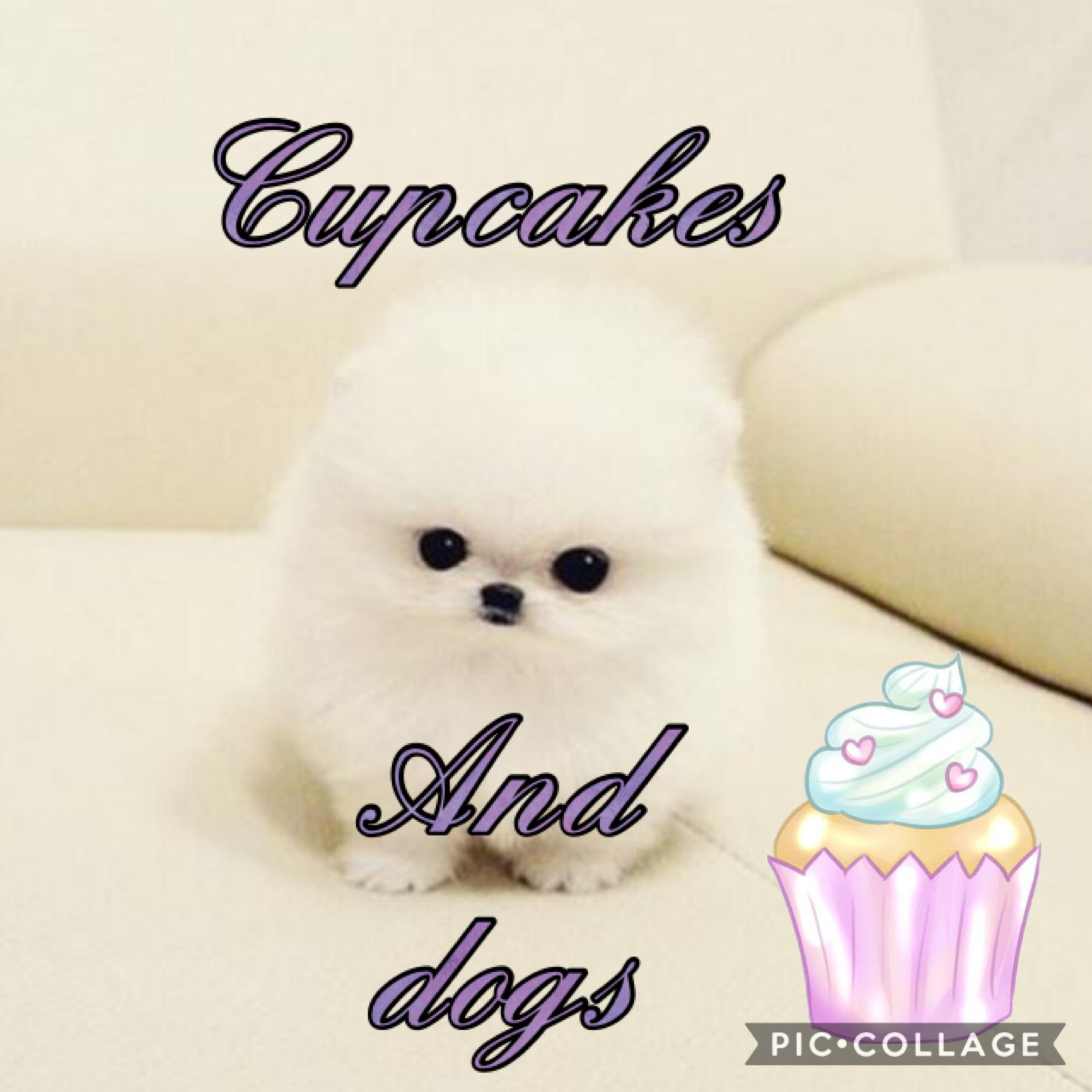 I love cupcakes and dogs
