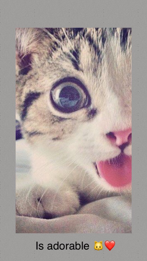 😸This beautiful kitten seems to be taking a selfie, does not seem tender 🐱😛😉