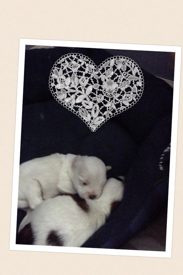 So cute dog had puppies