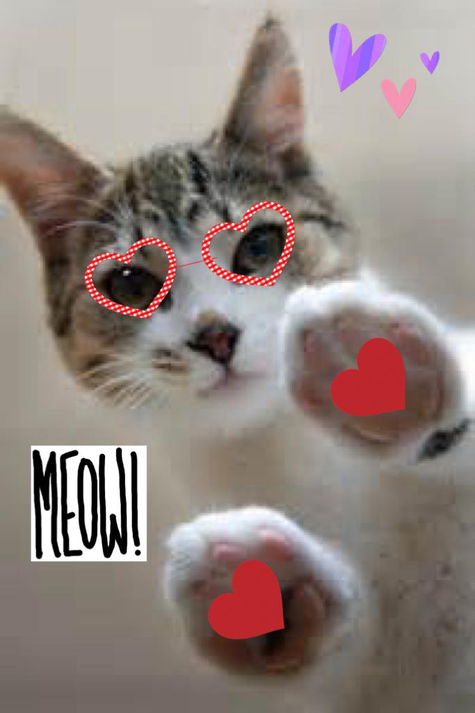 Meow 🐱