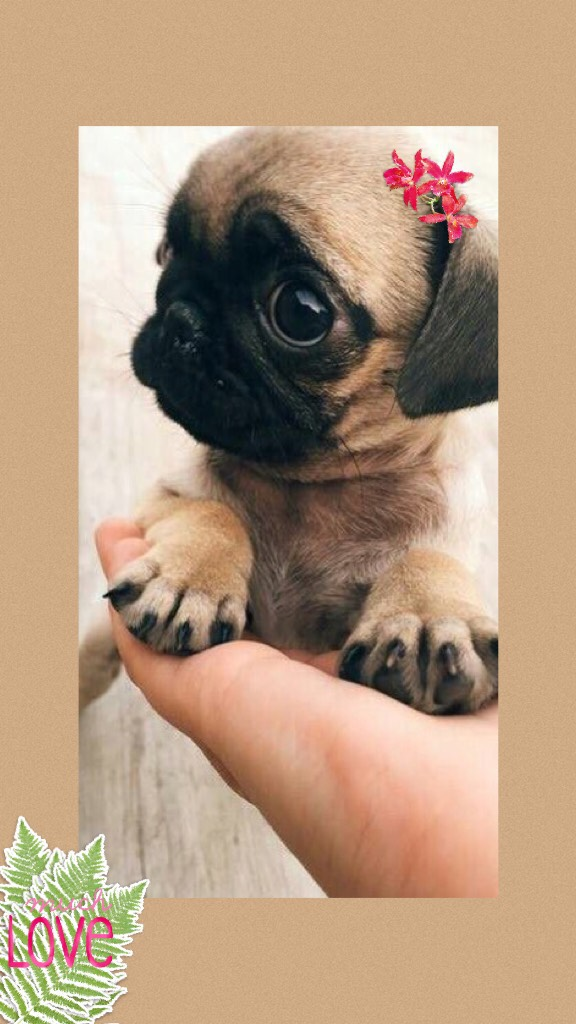 This is a small and super kiut puppy 🐶🤩❣️🍃🌸