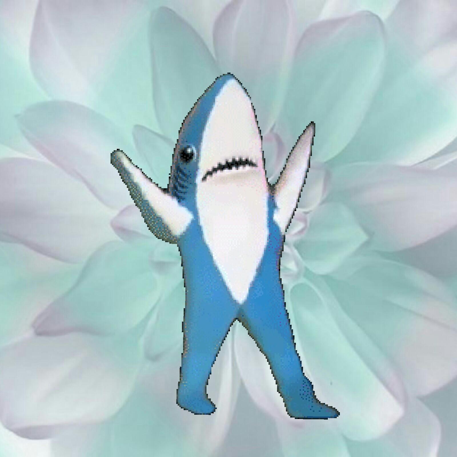 Танец акулы гифка, открыткам строгие самые
