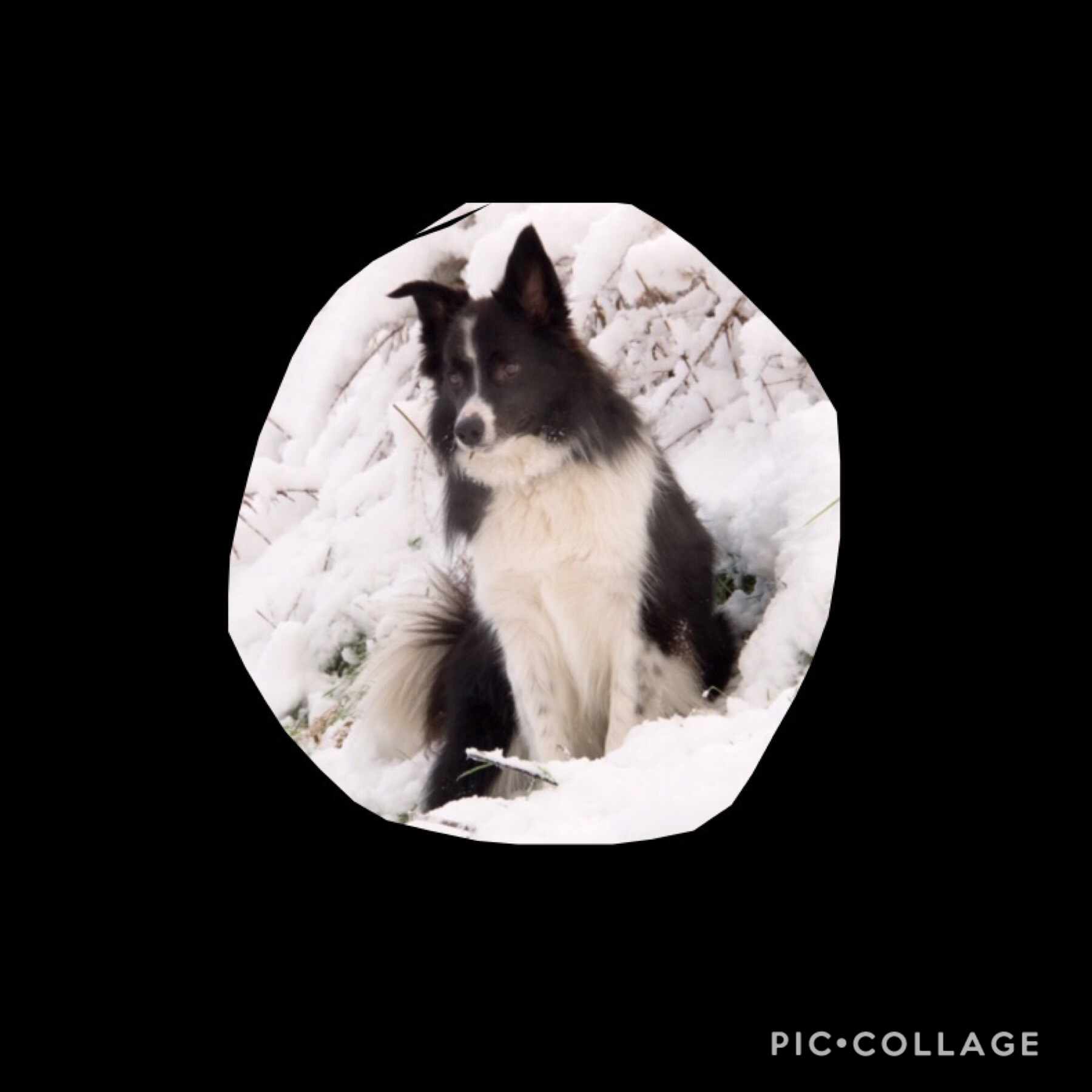 tAp   This is my cute puppy like if you like him