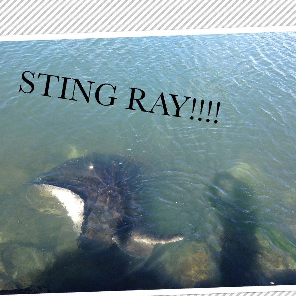 This was the first time i have ever seen a wild sting ray🤟