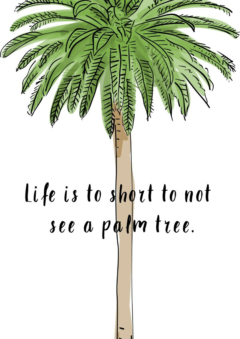 Life is to short to not see a palm tree.