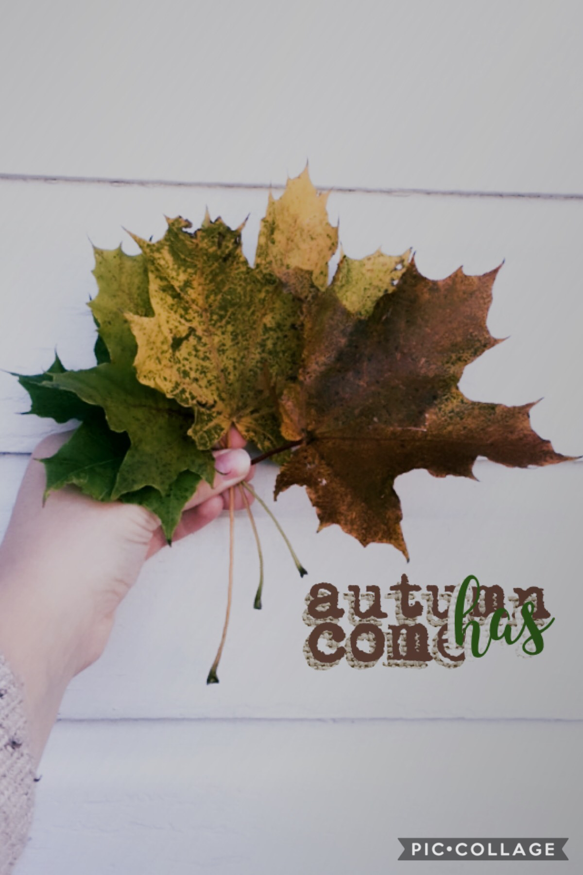 """✨🍁✨ This sûcks royally It's terrible  But the picture is good It's called  """"Cool Leaves I Found In My Backyard feat. My Ugly Hand""""  Yay Oh! I sit right by my crush in Algebra now"""