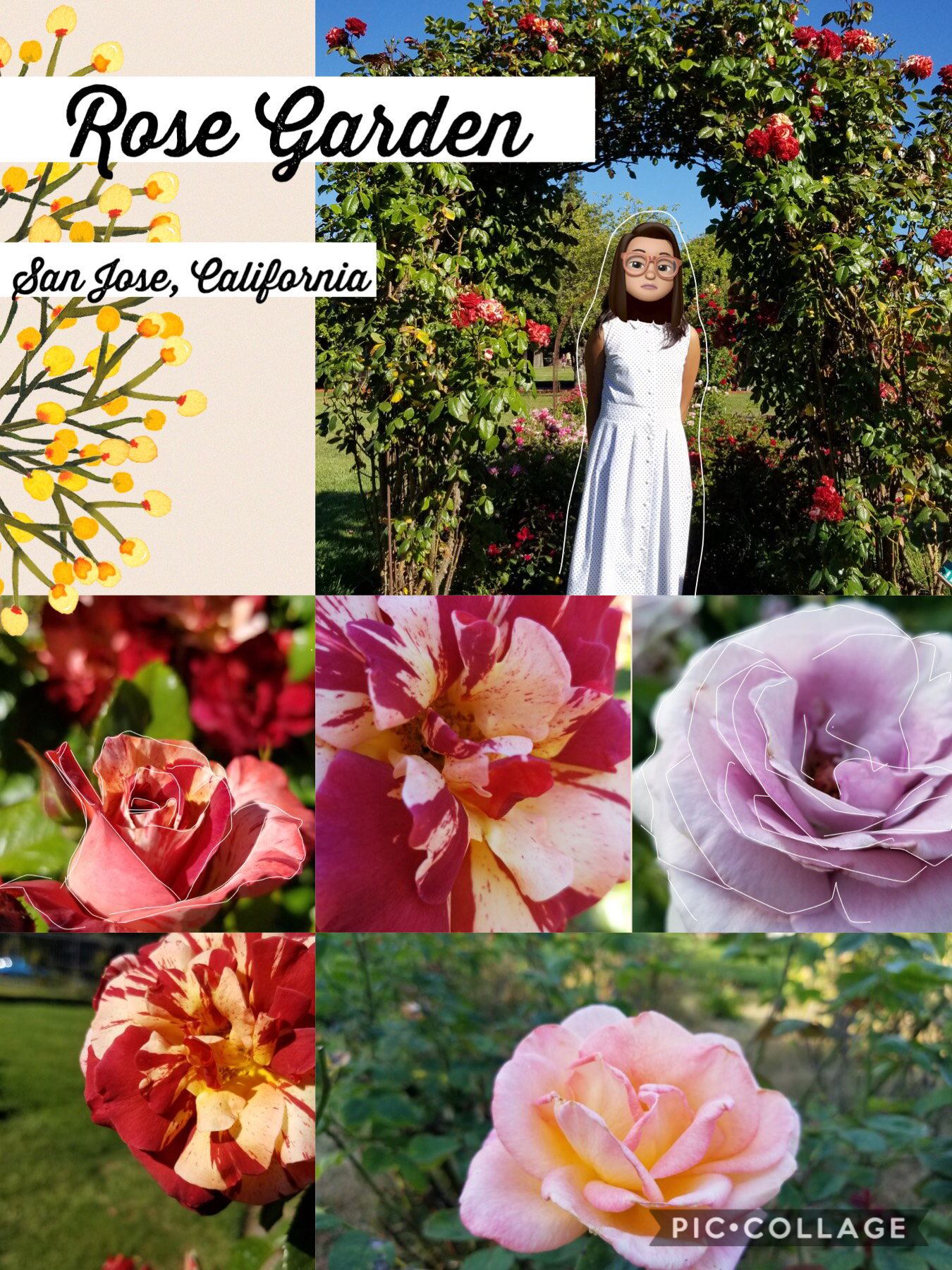 - 🥭 -  Sorry I haven't been posting collages in a while... I was so busy this month 😓 Anywayzzzzzz... this rose garden is sooooo beautiful! Once you walk in, you already SMELL the rose fragrance. There were so many different types of roses~ 🌹🌹🌹