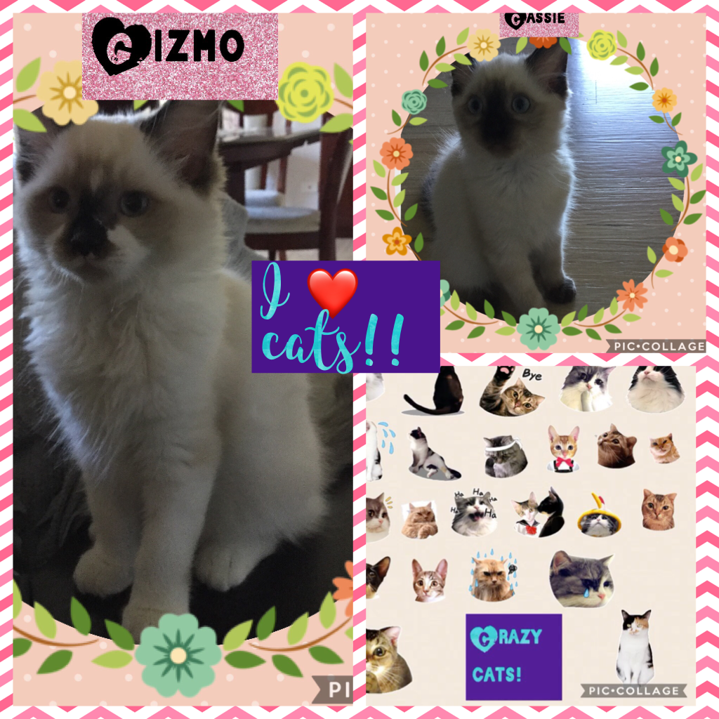 I ❤️ cats!!