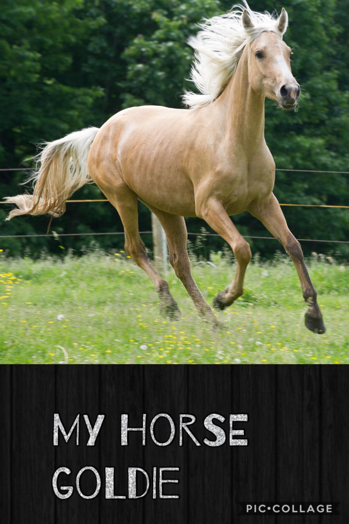 My horse Goldie