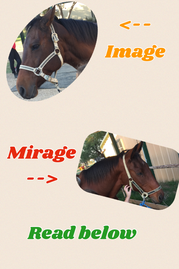 🐎🐴Tap🐴🐎 I love horses so my dad signed me and my sister up for lessons at a place at starline stables and I love doing riding there. In the top picture that is image! Mirage's daughter ( I was told) they are so sweet I love both of them. They r both girls