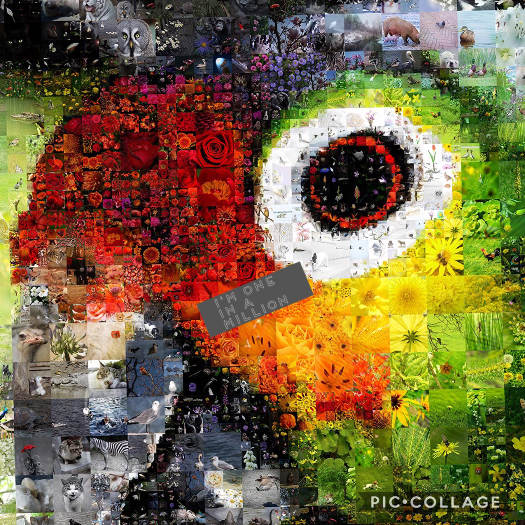 Collage by itskmatt