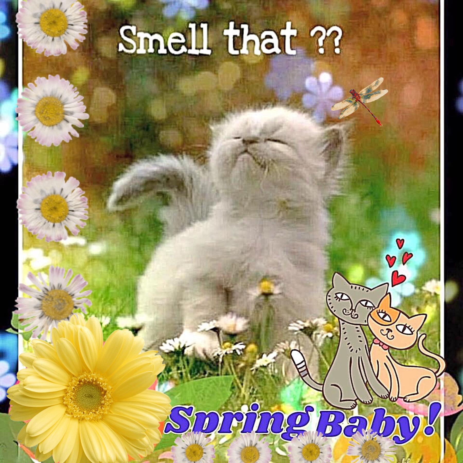 Kitty is loving Spring