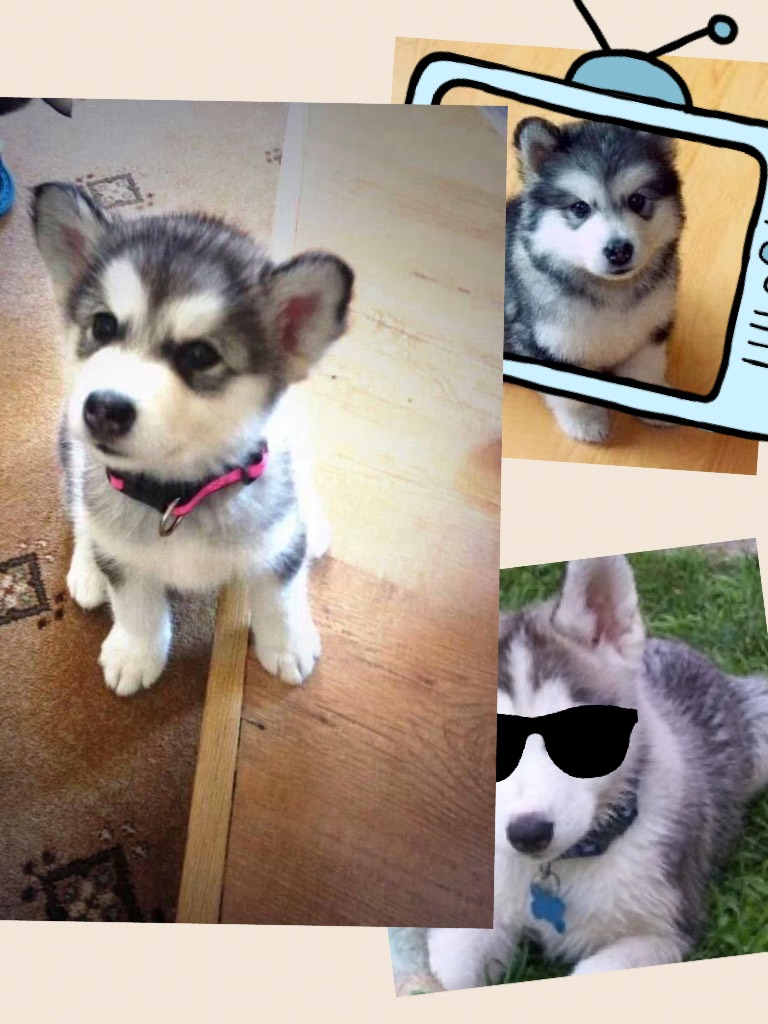 My sister made this one........(she ❤️ huskies!)