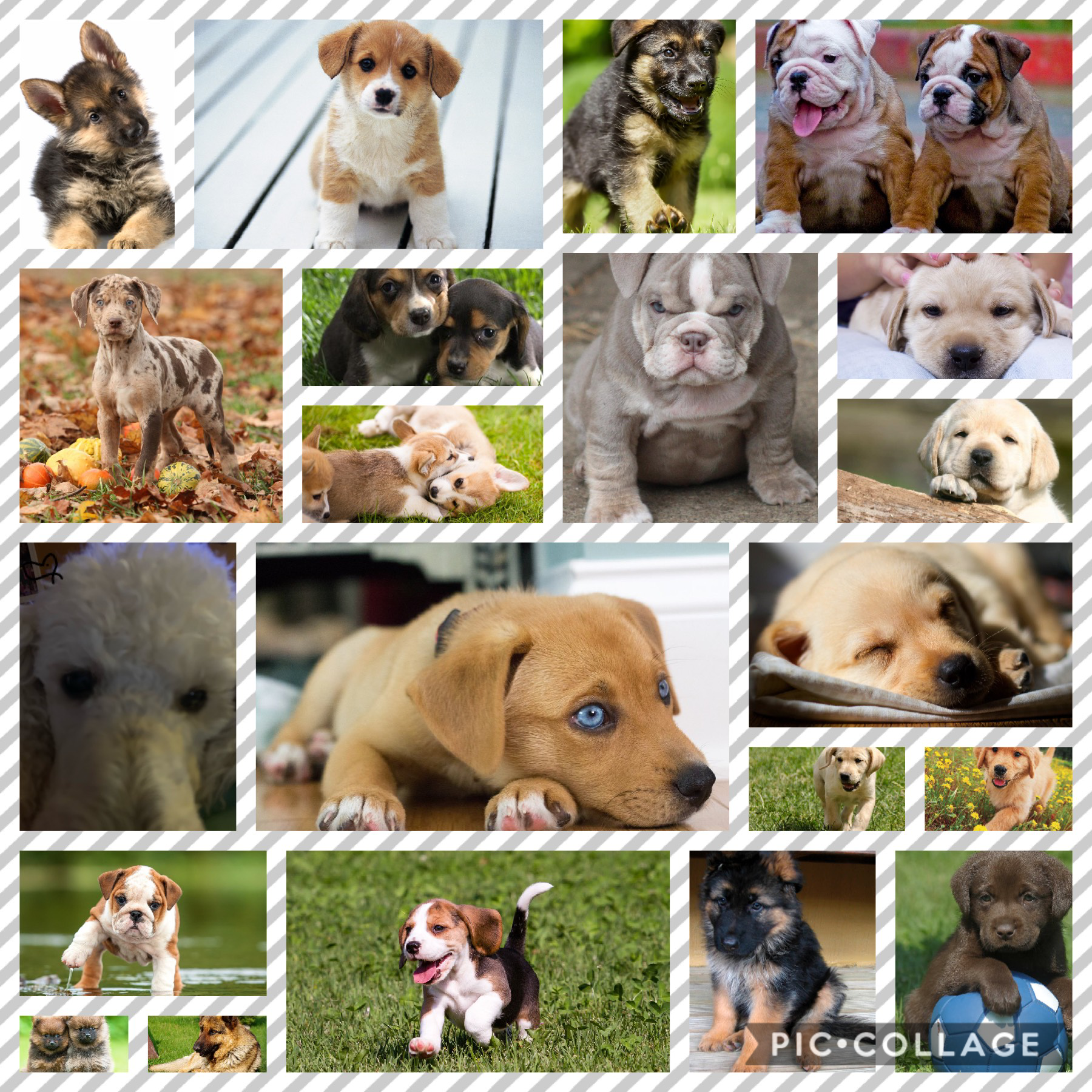 I love puppy's!! If u can find the picture of the puppy with the heart by it I will like some of your pictures. (Probably about 5 or 8 of them.)