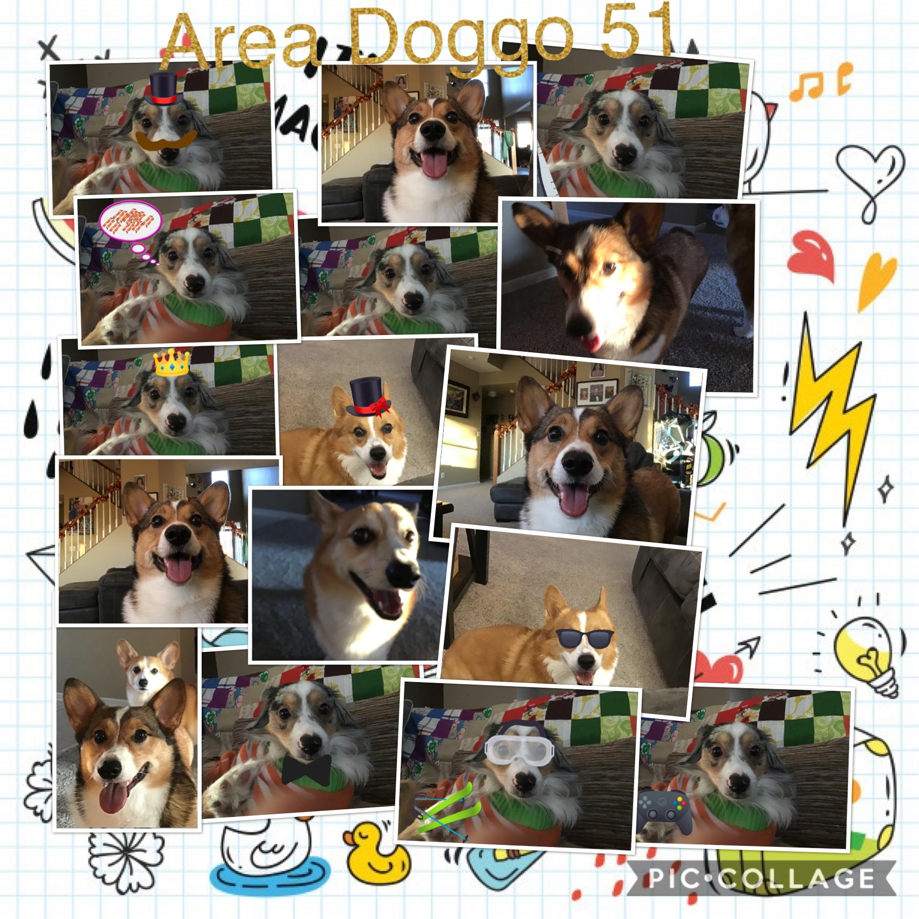 Area doggo 51 😂😆😉😁😊🤣
