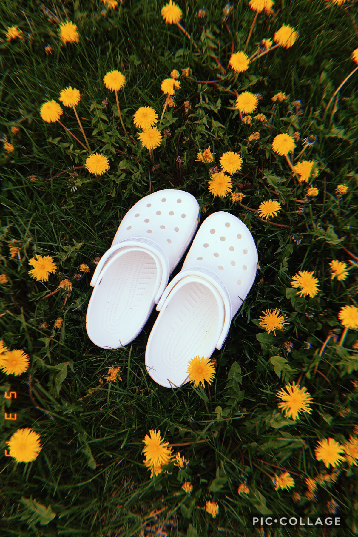 •tApPiTy• (5/3/19) uhm sry i haven't posted for a longgggg time😬 but uh.. I GOT CROCS🤪 anyway, i'll prob just be posting some of my photography for a lil bit ig idk QOTD: who's ur fav youtuber? AOTD: Emma Chamberlain or Cody Ko