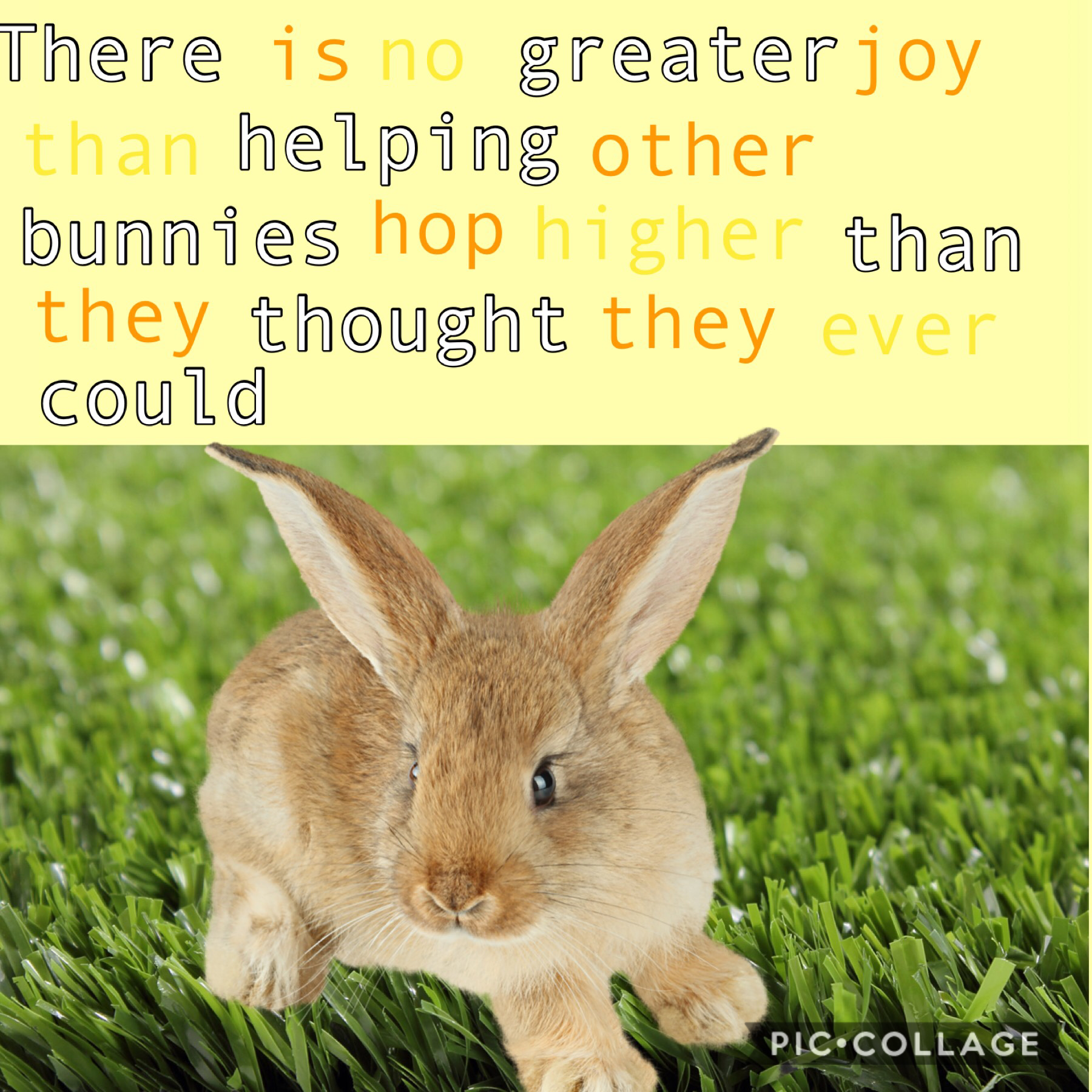 There is no greater joy than helping other bunnies hop higher than they thought they ever could!🐰