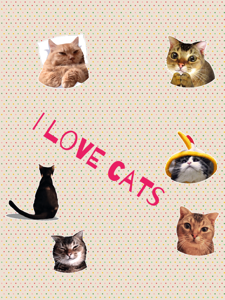 I love cats. If also love cats, follow me