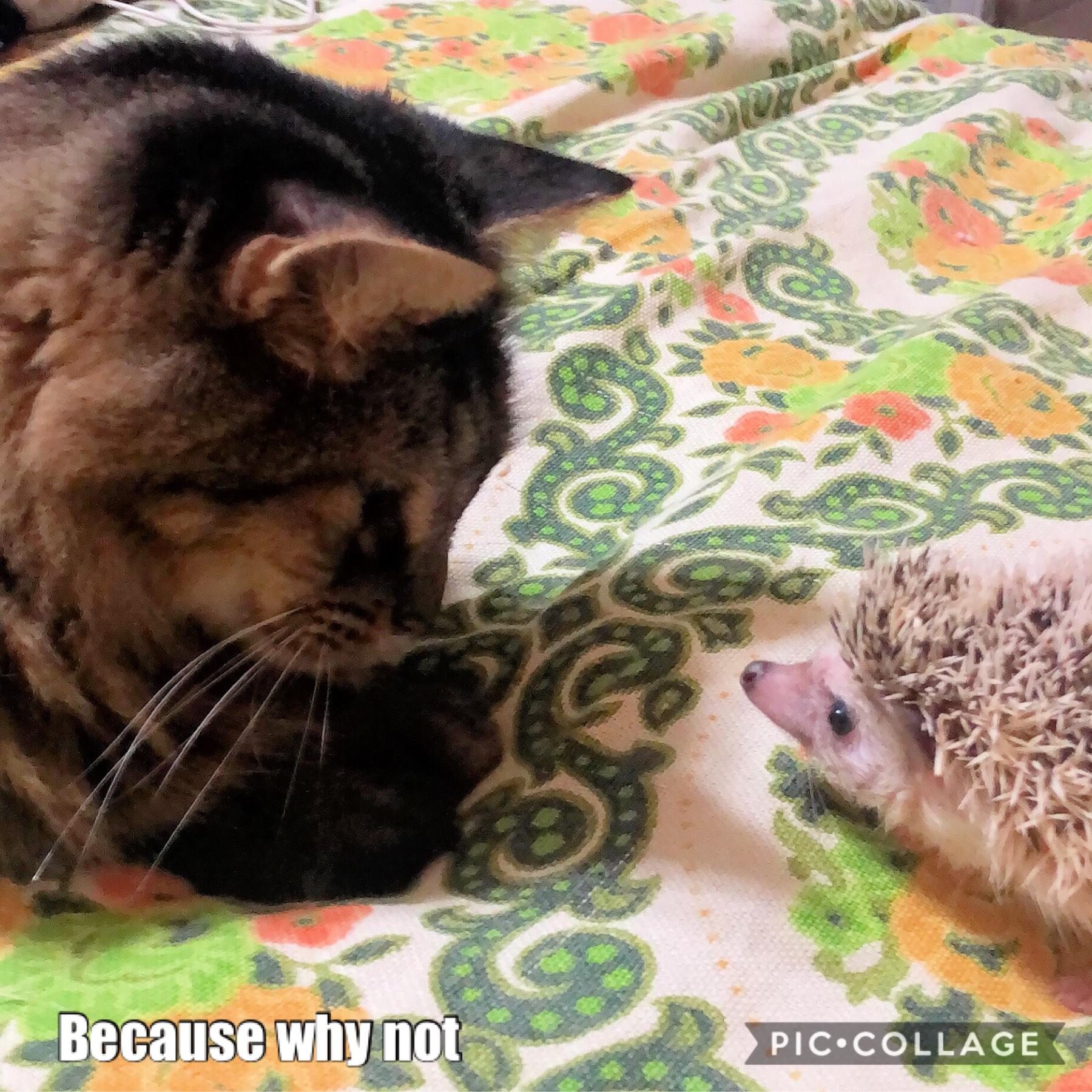 My Cat Moe + Bunny