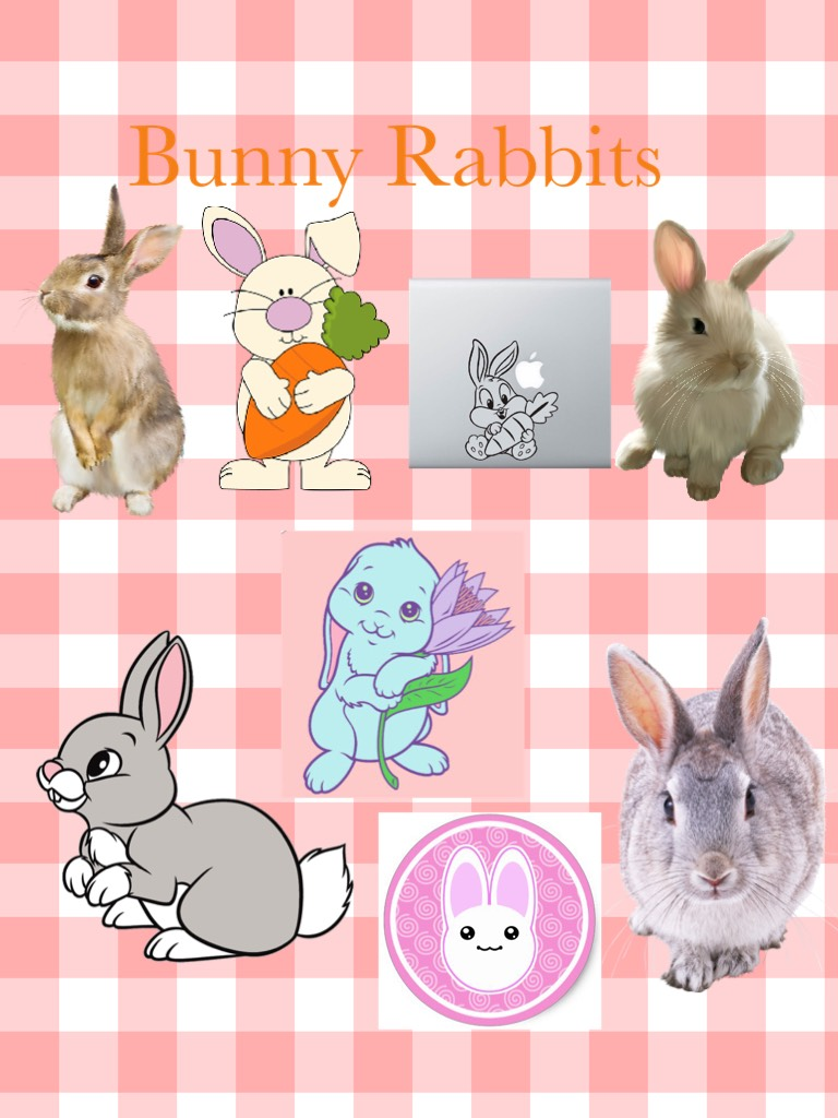 I love bunnies so much and I found so many cute pictures of bunnies 🐰