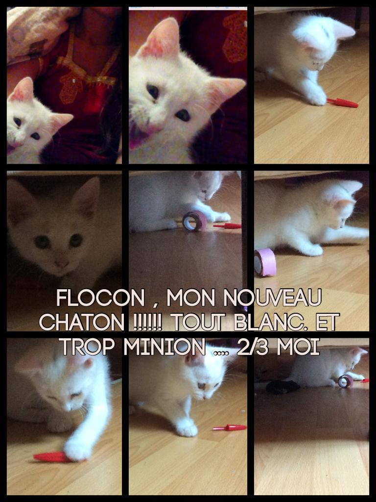 Flocon , mon nouveau chaton !!!!!! Tout blanc. Et trop minion .... 2/3 moi