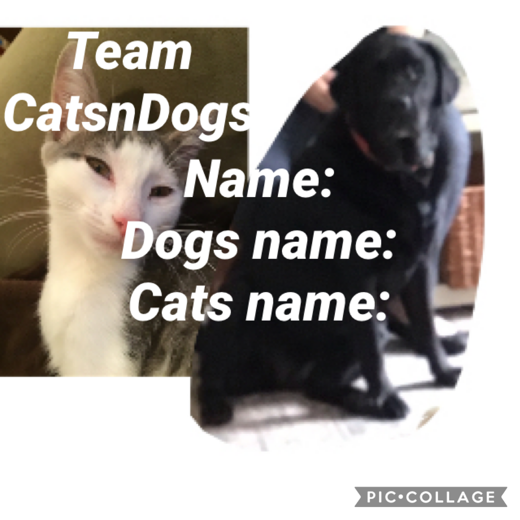 When I am on pic collage( which is once in a while) I will give pet challenges, so join CatsnDogs!!!! Ok bye!