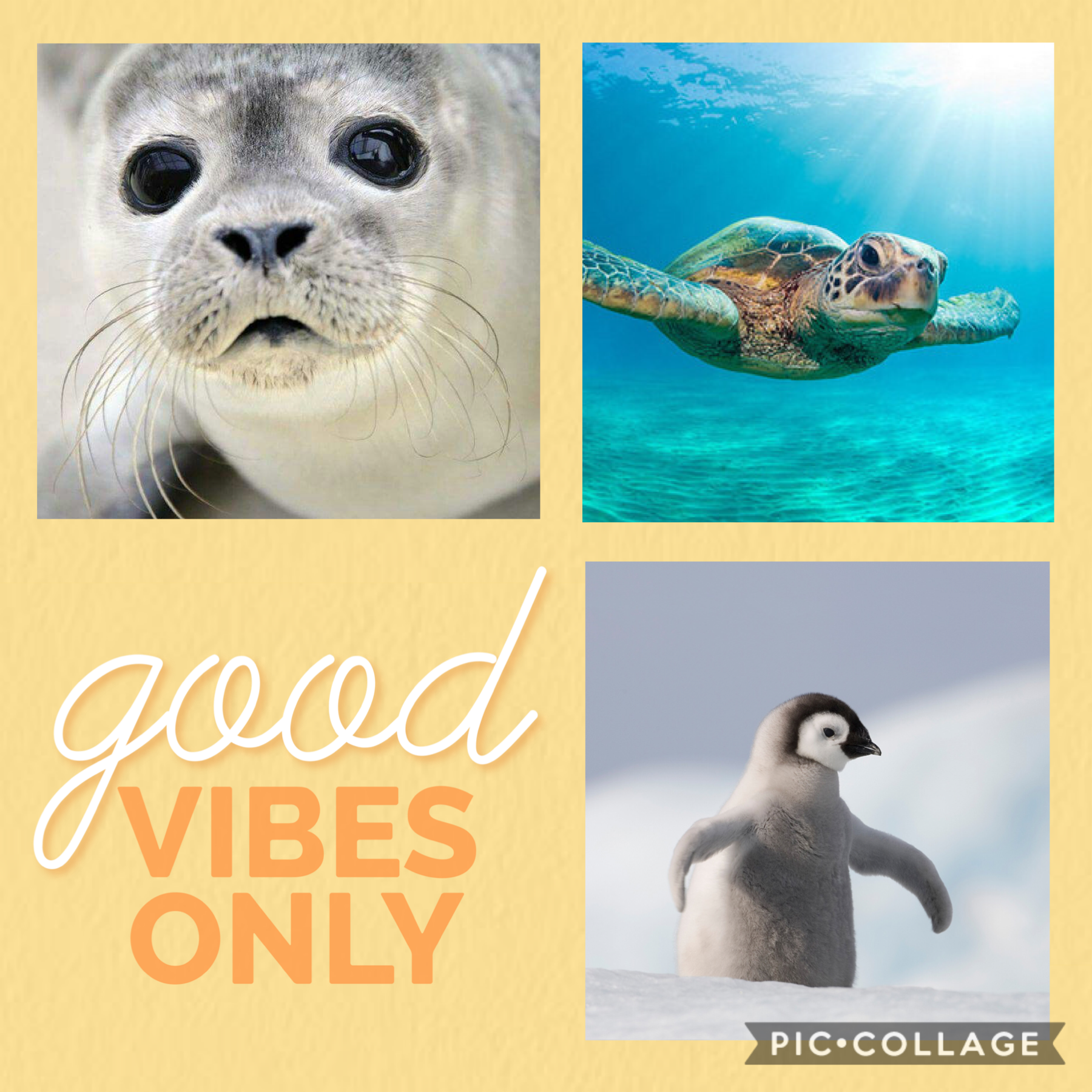 Good VIBES only HERE