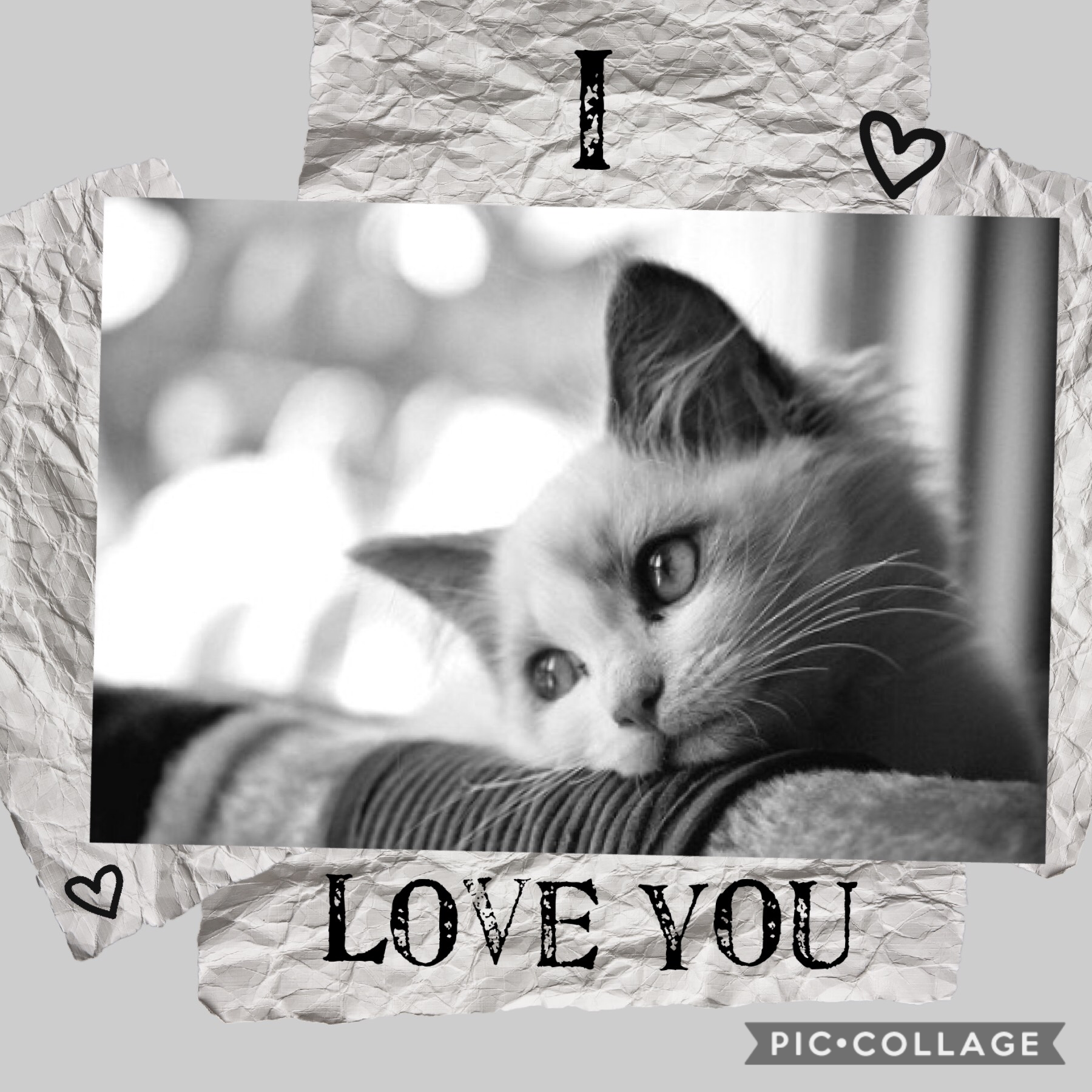 Tap...😰 Hey guys! My cats at the vet and he might... pass away😭